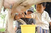 箱根牧場 乳搾り 幼児.jpg