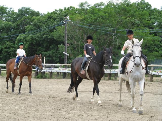 馬 子供 × 3.jpg