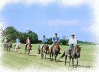 札幌周辺乗馬体験 どさんこ