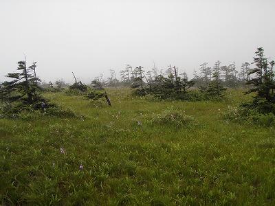 松山湿原景観