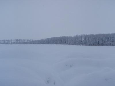川島さんの畑雪景色