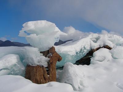 糠平湖氷のキノコ