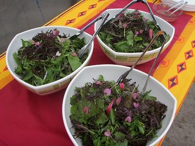 余湖農園さん葉野菜サラダ