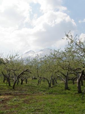 岩木山とりんご畑