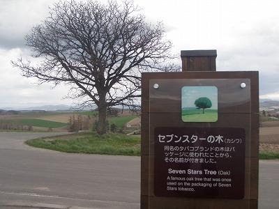 裸のセブンスターの木と看板