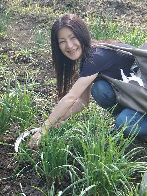 100マイル三浦さんニラ収穫