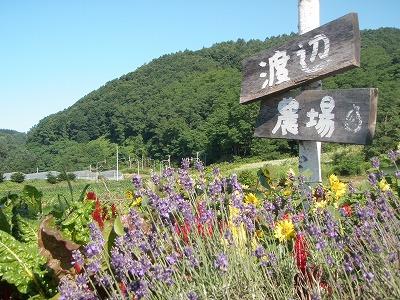渡辺農場の看板2011