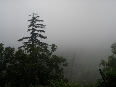 松山湿原登山路から森