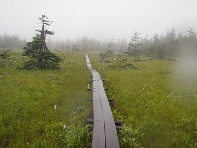松山湿原木道まっすぐ