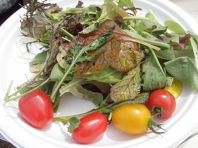 2011大塚ふぁーむレストラン最初のサラダ