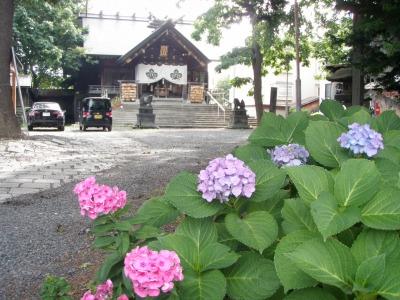 札幌諏訪神社あじさい