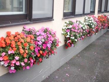 喜茂別役場壁の花
