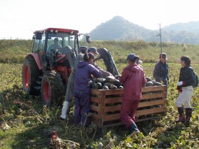 長尾農園さんの収穫をお手伝い