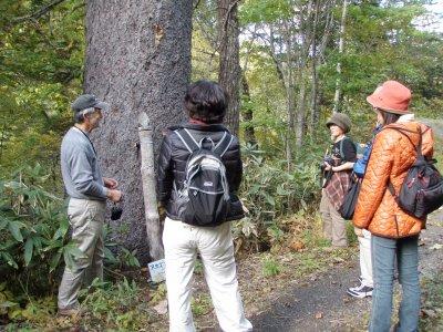 ビッキの木の説明
