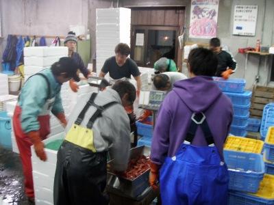 羽幌甘エビ市場出荷見学