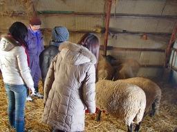 羊の群れと~