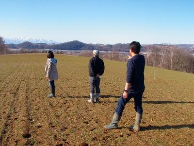 渡辺農場の小麦畑