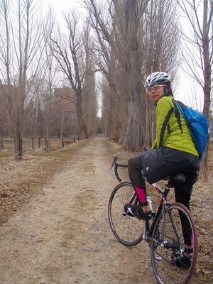 シティサイクリングポプラ並木