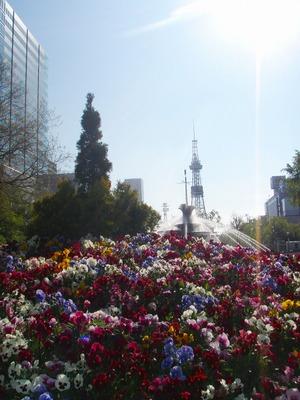 朝の花壇、テレビ塔