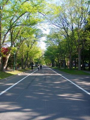 北大キャンパス緑のトンネル