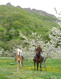 ワイルドムスタングスさくらんぼの花の下