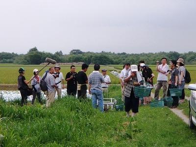 大塚ふぁーむ収穫風景
