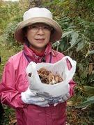 キノコ狩り収穫1