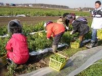 大塚ふぁーむ鍋野菜収穫2