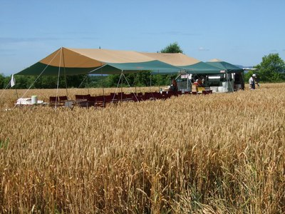 2011小麦畑でレストラン遠くから