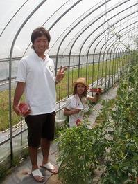 2011畑でBBQレストランミニトマト収穫体験1