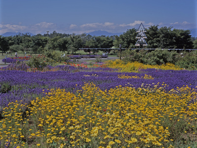 百合が原公園2.jpg