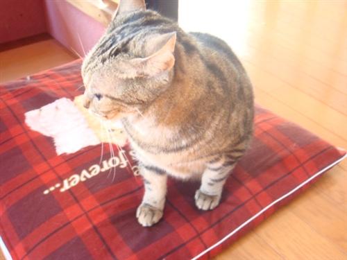 フレンドリーファームさんの猫.jpg