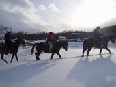 富良野 冬の乗馬体験