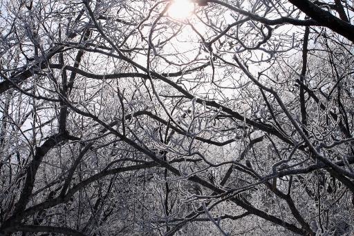 霧氷,阿寒,森