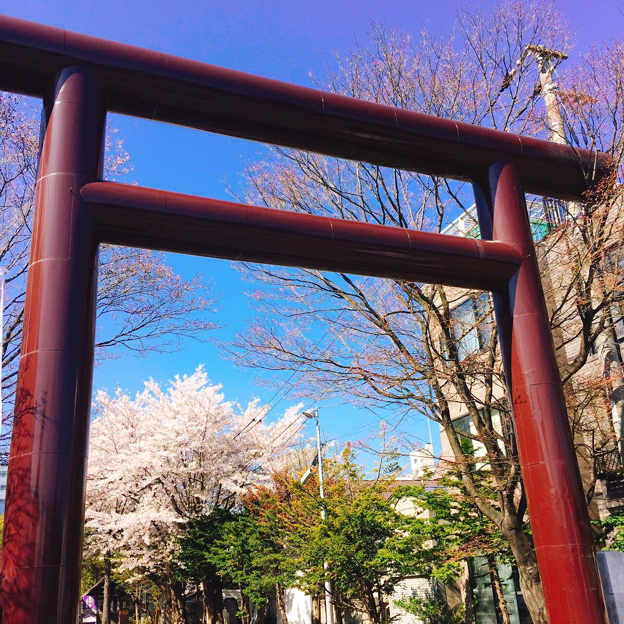 豊平神社の桜